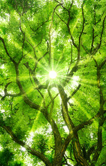 Sonne strahlt zauberhaft durch das Blätterdach eines Baumes