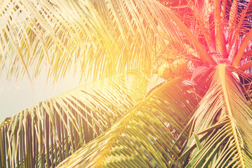 Palm Trees, as Background with solar effect