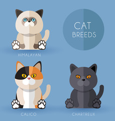 Cat Breeds : Vector Illustration