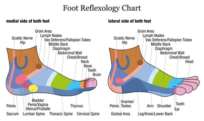Foot reflexology chart - medial-inside and lateral-outside view of the feet - with description of corresponding internal organs and body parts. Vector illustration on white background.