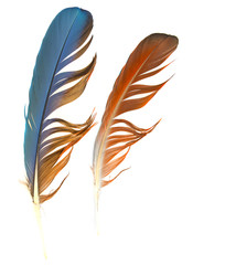 feathers on white background
