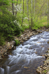 Creek in the Spring