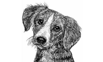 Dog 01 Monochrome / Drawing monochrome illustration vector.