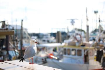 Seagull at Harbor