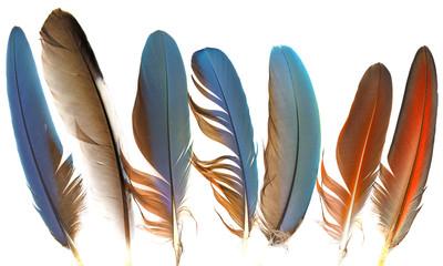 feathers Fotoväggar