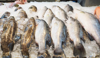 Fresh fish in market