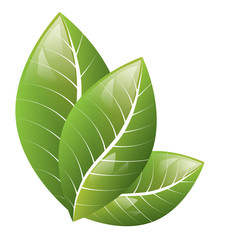 Vector. Beautiful green leaves on a white background