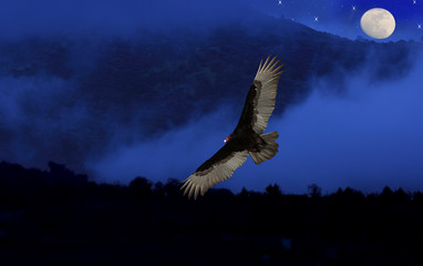 An abstract artistic design of a Turkey Vulture flying over the mountains with a deep blue sky at night and a full moon.