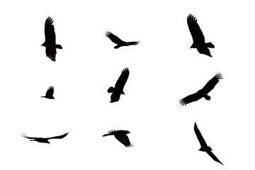 Black crows flying on a white isolated background.