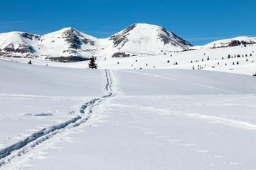 Single cross country ski track through pristine snow near Silverton, Colorado