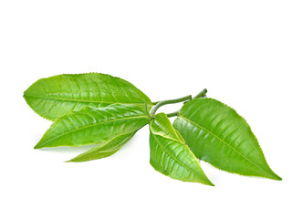 Wall Mural - Green tea leaf isolated on white background