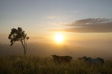 Atherton plateau morning mist, Australia -2