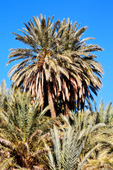 tropical palm in morocco    and the