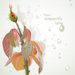 Rosebud with a field for your lyrics. Romantic banner 2