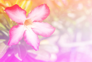 Abstract Blurry of Flower and colorful background. Beautiful flowers made with colorful filters.