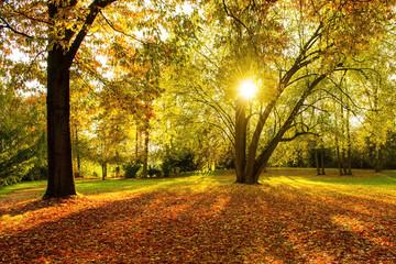 Herbst - Gegenlicht