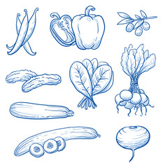 Set of fresh vegetables: beans, paprika, olive, gherkins, cucumber, spinach, radish, turnip. Hand drawn doodle vector illustration.