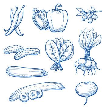 Set of fresh vegetables: beans, paprika, olive, gherkins, cucumber, spinach, radish, turnip. Hand drawn doodle vector illustration.