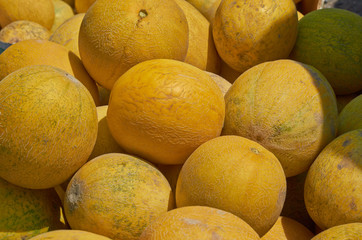 Heap of yellow melons.