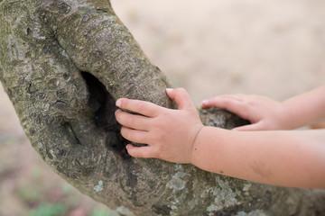 木に触る子供の手
