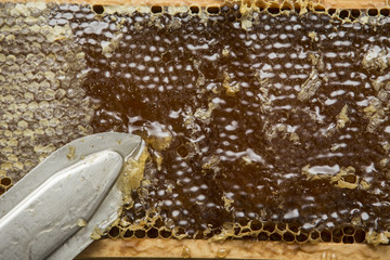 beekeeper removed the beeswax to let out the honey