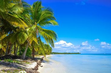 Canvas Prints Tropical beach Beach on the tropical island