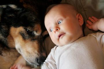 Newborn Baby Laying with Pet German Shepherd Dog