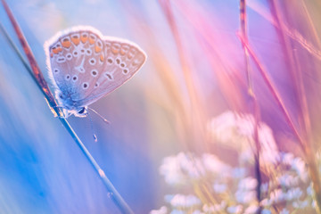 Butterfly on a meadow