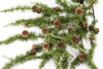 Larch ornament