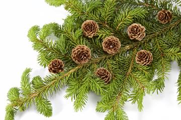 Decoration of fir tree