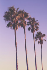 Row of four palm trees at sunset with purple sky