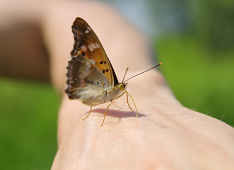 Бабочка крупным планом на руке