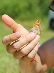 Бабочка на руке. Крупным планом