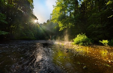 Beautiful landscape with summertime forest and river