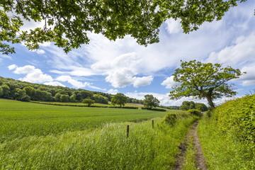 A beautiful day along the Chiltern Walk, The Chilterns, Buckinghamshire, England, United Kingdom, Europe