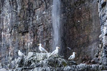 Glaucous gulls perching on rock against waterfall