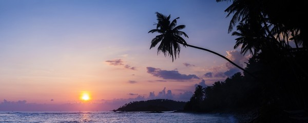 Palm tree at sunset on tropical Mirissa Beach, South Coast of Sri Lanka, Southern Province, Sri Lanka, Asia Fototapete