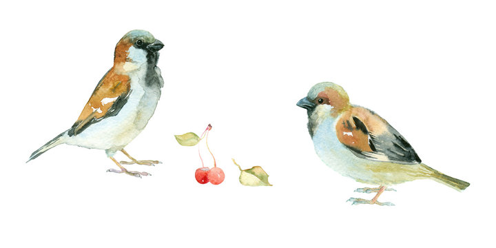 Two watercolor sparrows with cherries