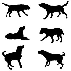 silhouette of dogs