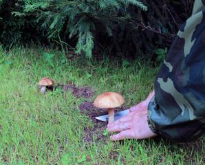 Young boletus mushroom