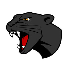 Puma head with bared teeth