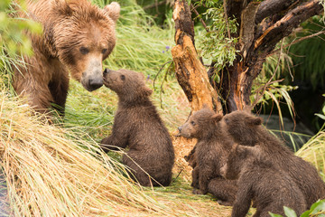 Four bear cubs greet mother beside tree