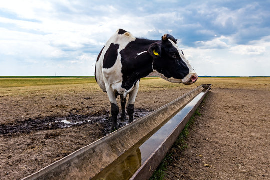 At the water trough