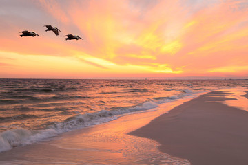 Wall Mural - Pelicans Fly Over the Beach as the Sun Sets