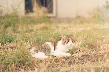 Cat resting in park a sunny day