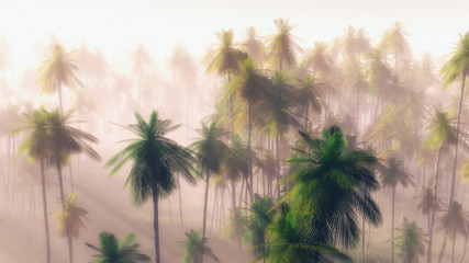 Jungle at dawn in the mist
