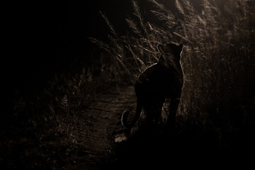 Dangerous leopard walk in darkness to hunt for prey artistic con
