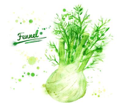 Watercolor fennel.