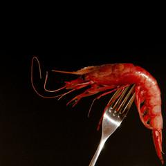 fresh red shrimp