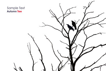 Tree silhouette with a crow